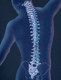 A diagram of a spine Oxford Health & Wellness Center in Oxford Ohio 45056